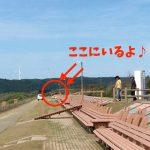 【石川県能登観光】世界一長いベンチでテンションMAX!久留米の方とも交流できた(笑)