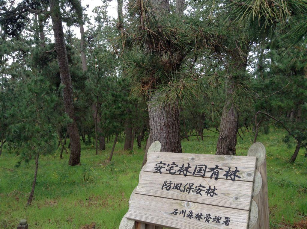 安宅国有林