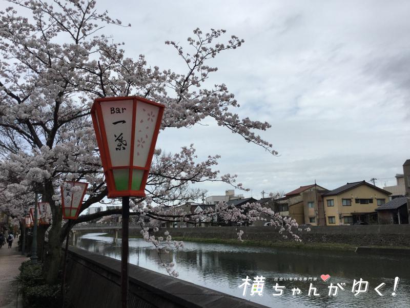 ひとは桜2