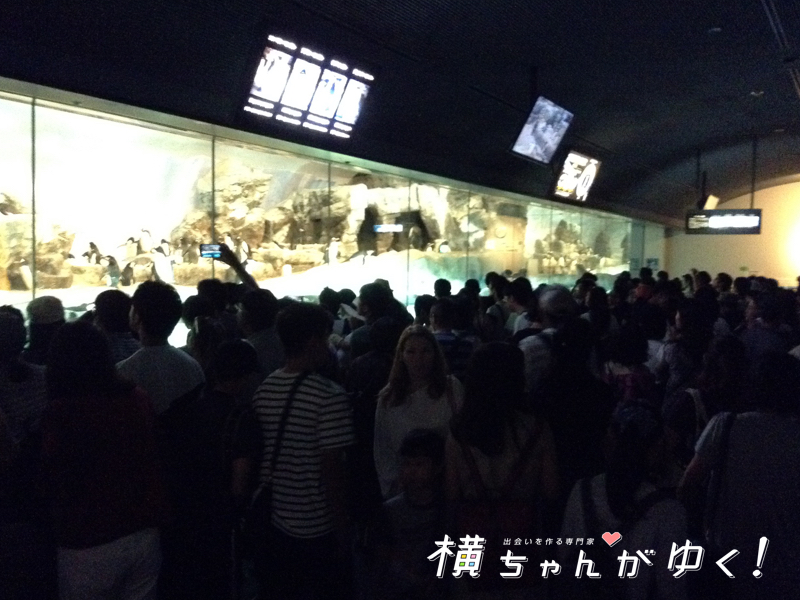 名古屋港水族館34