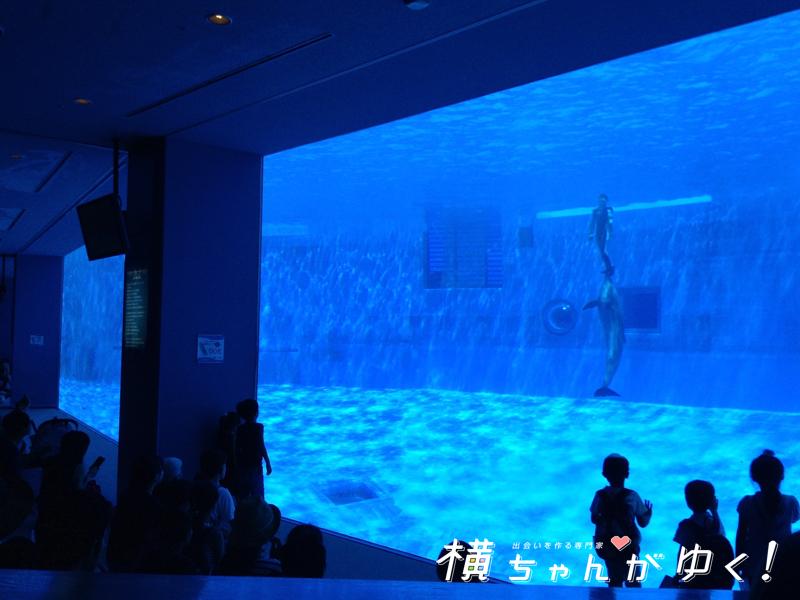 名古屋港水族館13