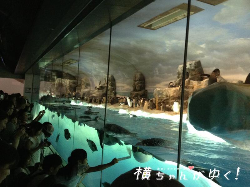 名古屋港水族館32