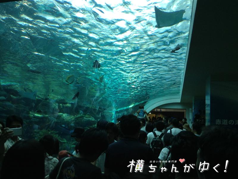 名古屋港水族館28