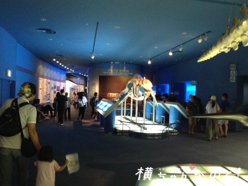 名古屋港水族館12