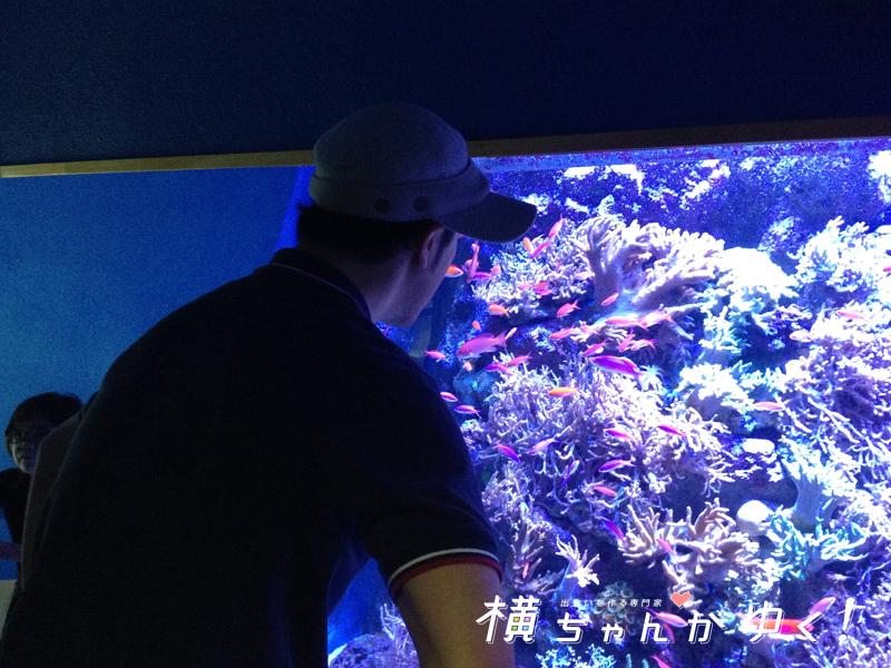 名古屋港水族館35