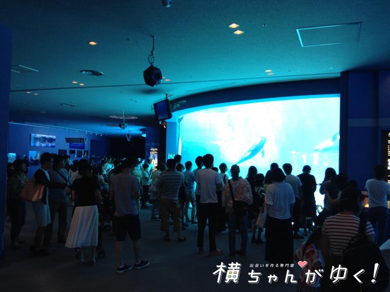 名古屋港水族館11