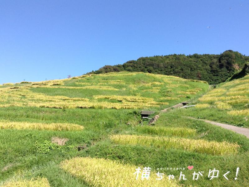 千枚田15