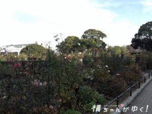 山下公園7