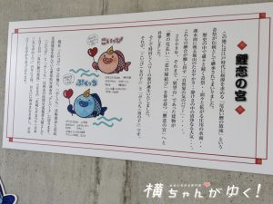 鯉恋の宮11